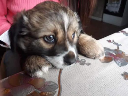 Dovanojame mielą šuniuką -3