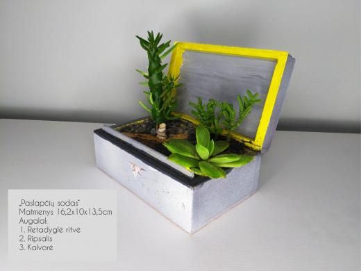 Sukulentai, kaktusai, augalai interjerui-4