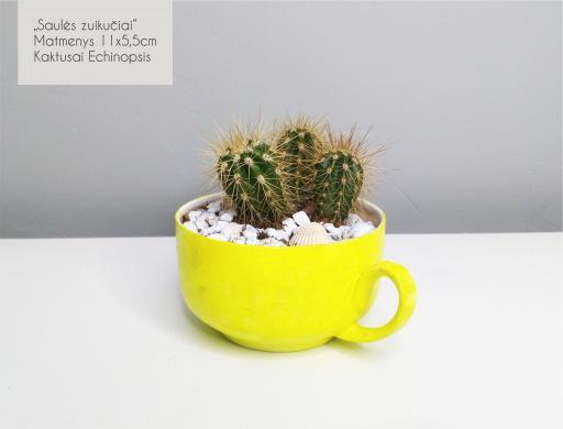 Sukulentai, kaktusai, augalai interjerui-3