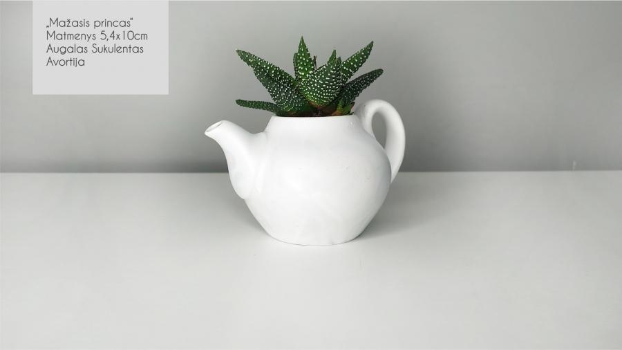 Sukulentai, kaktusai, augalai interjerui-6