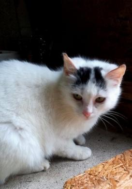 Dovanojama  meili katytė Cibera-3