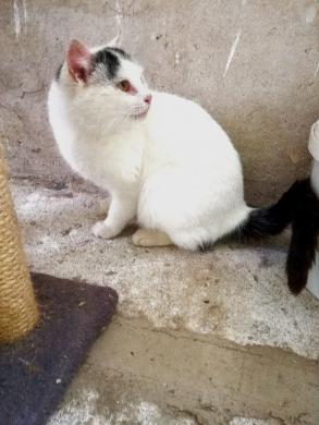Dovanojama  meili katytė Cibera-7