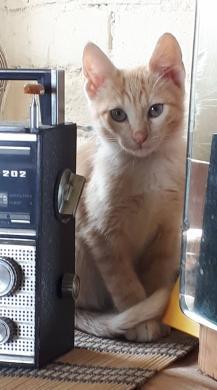 Dovanojamas katinėlis Šmaukštas-4