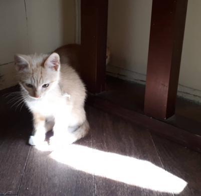 Dovanojamas katinėlis Šmaukštas-0