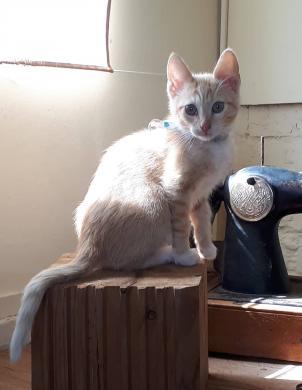Dovanojamas katinėlis Šmaukštas-1