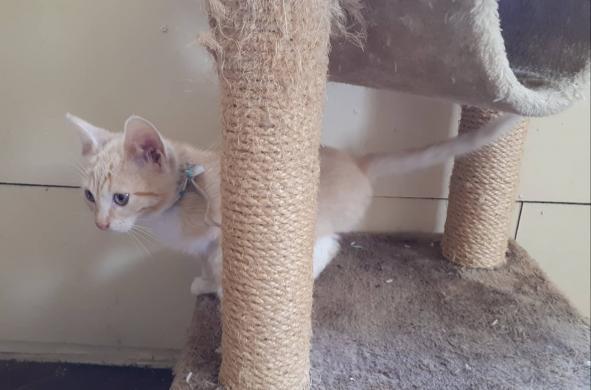 Dovanojamas katinėlis Šmaukštas-2