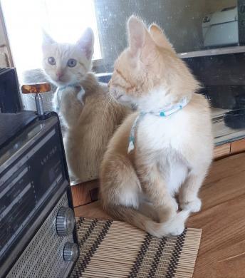 Dovanojamas katinėlis Šmaukštas-3