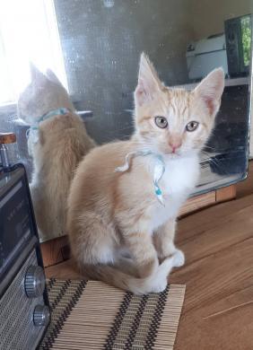 Dovanojamas katinėlis Šmaukštas-6