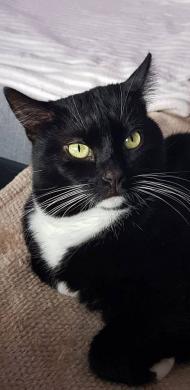 Dovanojama rami, draugiška katytė Dara-3