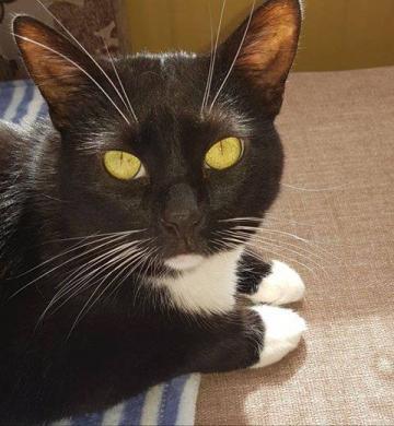 Dovanojama rami, draugiška katytė Dara-7