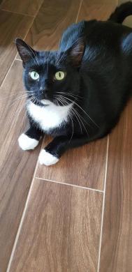 Dovanojama rami, draugiška katytė Dara-5
