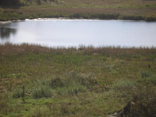 sklypas prie ežero-3