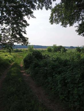 Parduodama sodyba su 3,15ha žeme prie Via Baltica-1