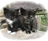 Kačiukai dovanų!-0