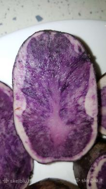 Ekologiškos Vitelotte bulvės. Šviežias derlius-0