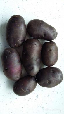 Ekologiškos Vitelotte bulvės. Šviežias derlius-1