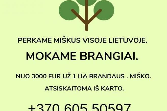 BRANGIAI PERKAME MIŠKUS-0