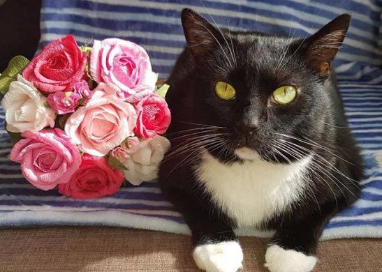 Dovanojama rami, draugiška katytė Dara-1