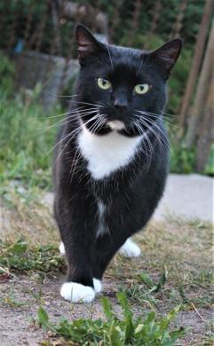 Dovanojama rami, draugiška katytė Dara-6