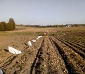 Pasarines bulves-0