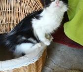 Dovanojama pūkuotukė, katytė Žizel-0