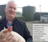 Darbas kiaulių fermoje Vokietijoje-0