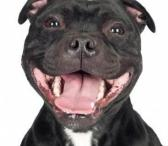 Šunų auklė: vedžiojimas Klaipėdoje-0