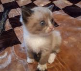Siamo kačiukai-0