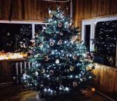 Kalėdiniai kirsti kėniai-0