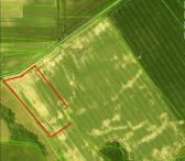 3,64 ha žemės ūkio sklypas  Norių km.Pasvalio r.-0