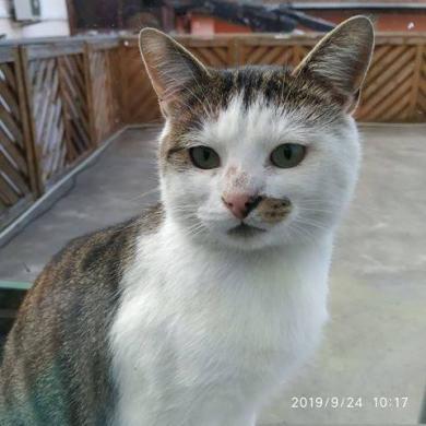 Dovanojamas draugiškas, meilus katinėlis Širdukas-0