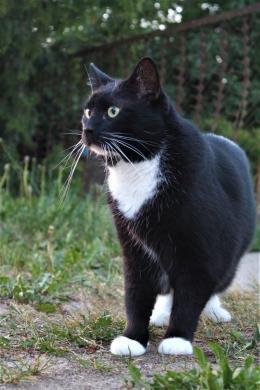 Dovanojama rami, draugiška katytė Dara-4