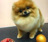 Šunų kirpėjų mokykla Dog Spa-0