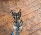 Dovanojamas  draugiškas šuo Gučis-0