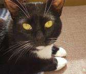 Dovanojama rami, draugiška katytė Dara-0
