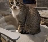 Dovanojamas katinėlis Alfas-0