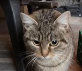 Dovanojama katytė Rafa-0