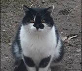 Dovanojama  meili ir draugiška katytė  Kuzia-0