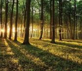 Brangiai perkame mišką visoje Lietuvoje. Padedame sutvarkyti dokumentus. Konsultuojame.-0