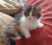 Meino meškėnų kačiukai-0