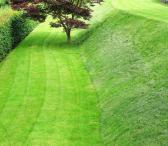 Pjaunu žolę,krūmus.Klaipėda,Palanga,Kretinga-0