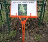 Lentelės sodinukų / augalų žymėjimui 15,5x9,5 cm.-0