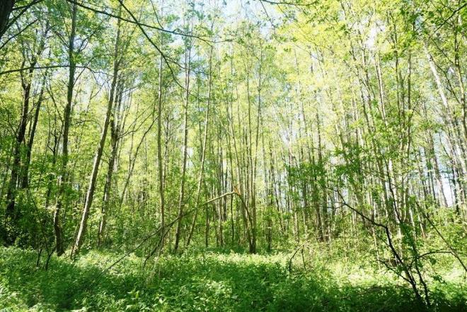 3,3 ha miškas Grybelių k. Utenos r.-0
