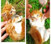 Dovanojami kačiukai-0