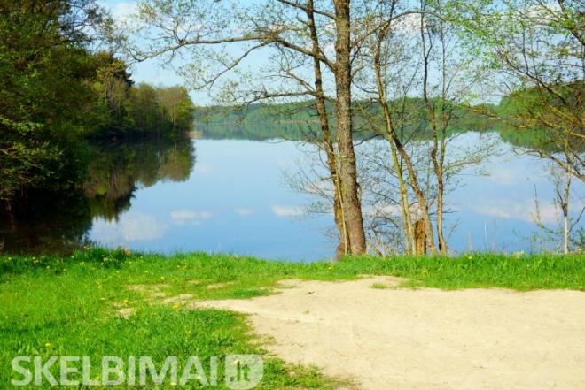 prie Vencavų ežero prie Balčio ežero (kranto 50 metrų) prie miško pušynas-0