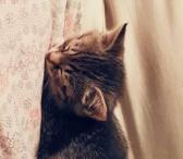 Kačiukai-0