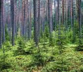 Perkame mišką-0