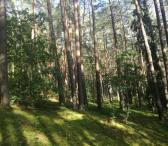 Gauk geriausią miško kainą 864404447-0