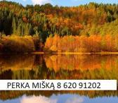 Įmonė brangiai perka įvairų mišką visoje Lietuvoje-0