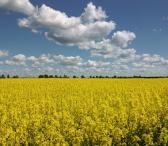 Žemės ūkio sklypai-0